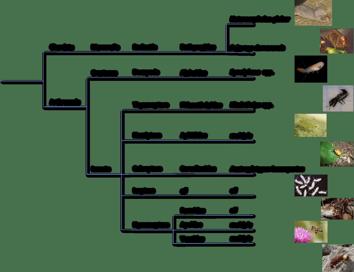 File Diagram Of Eusocial Species
