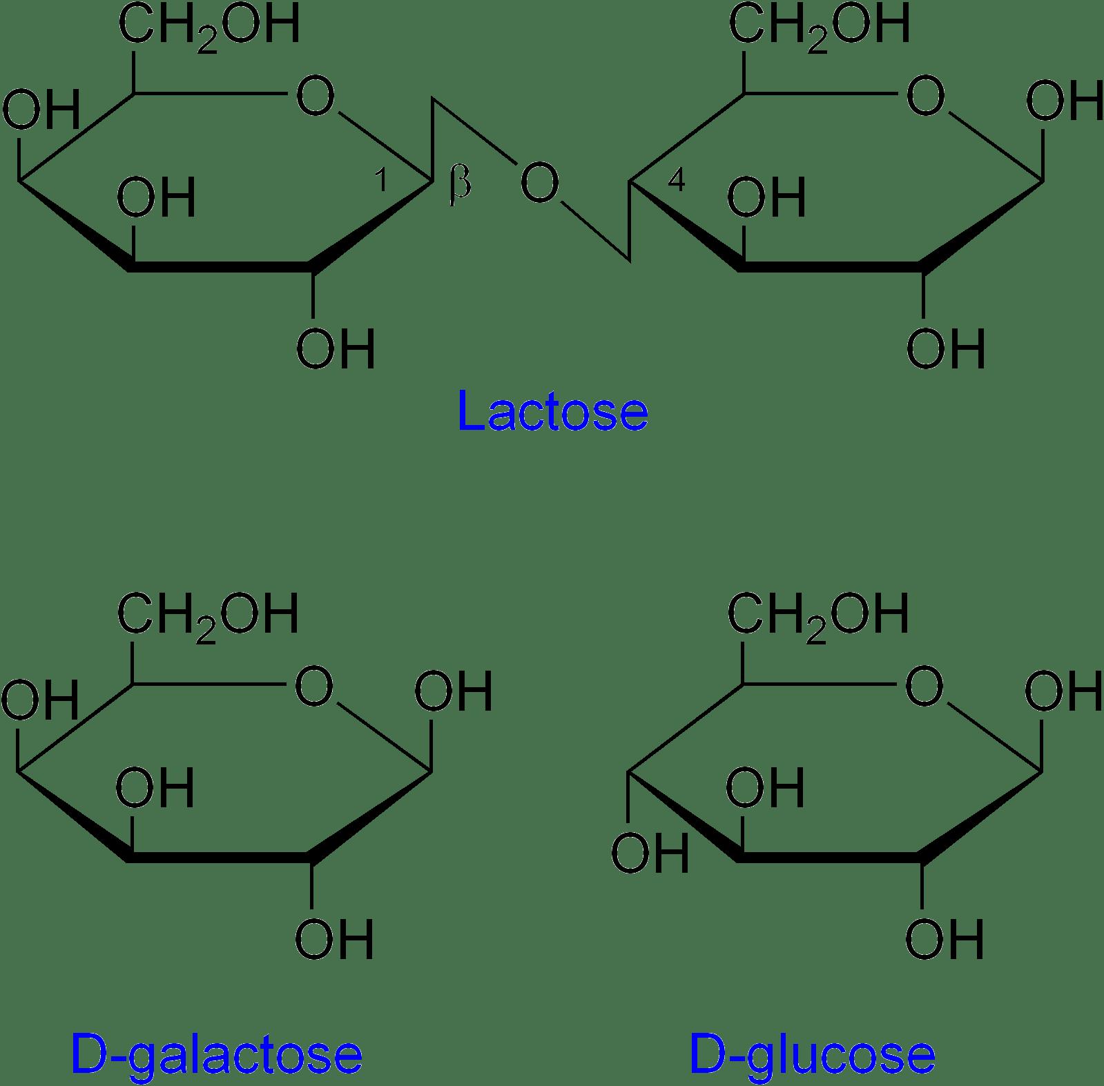 File Lactose Etc
