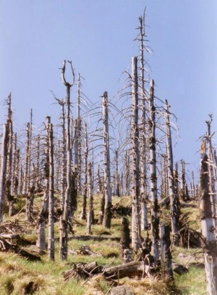 Acid Rain Kills Trees
