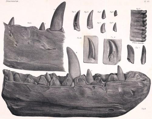https://i2.wp.com/upload.wikimedia.org/wikipedia/commons/6/6f/Megalosaurus_dentary.jpg?resize=500%2C391&ssl=1