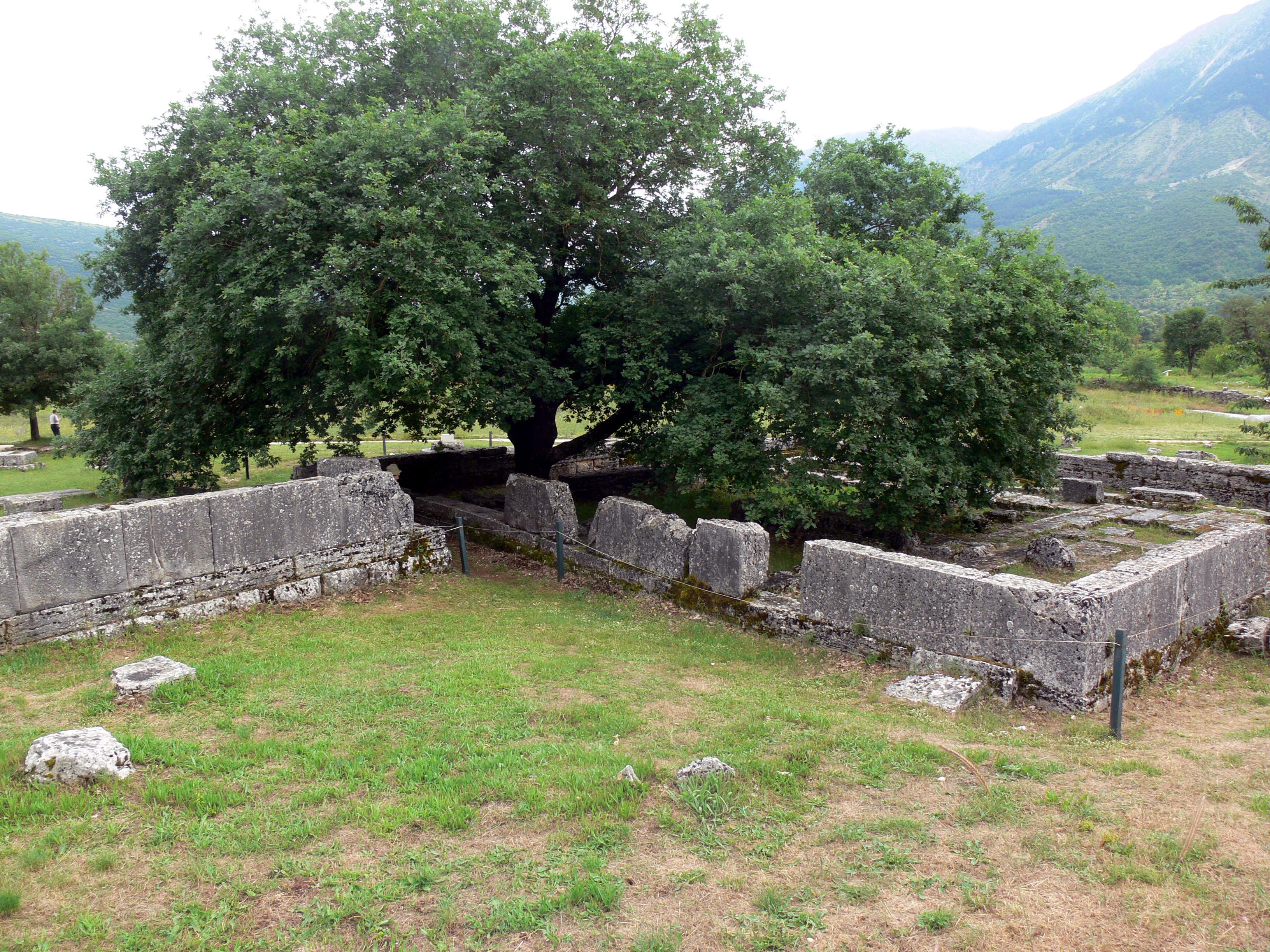 Image result for Sacred Oak at Dodona
