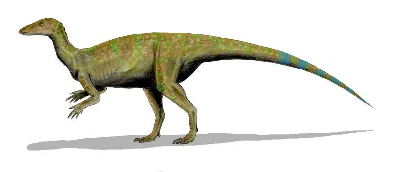 File:Thescelosaurus BW3.jpg