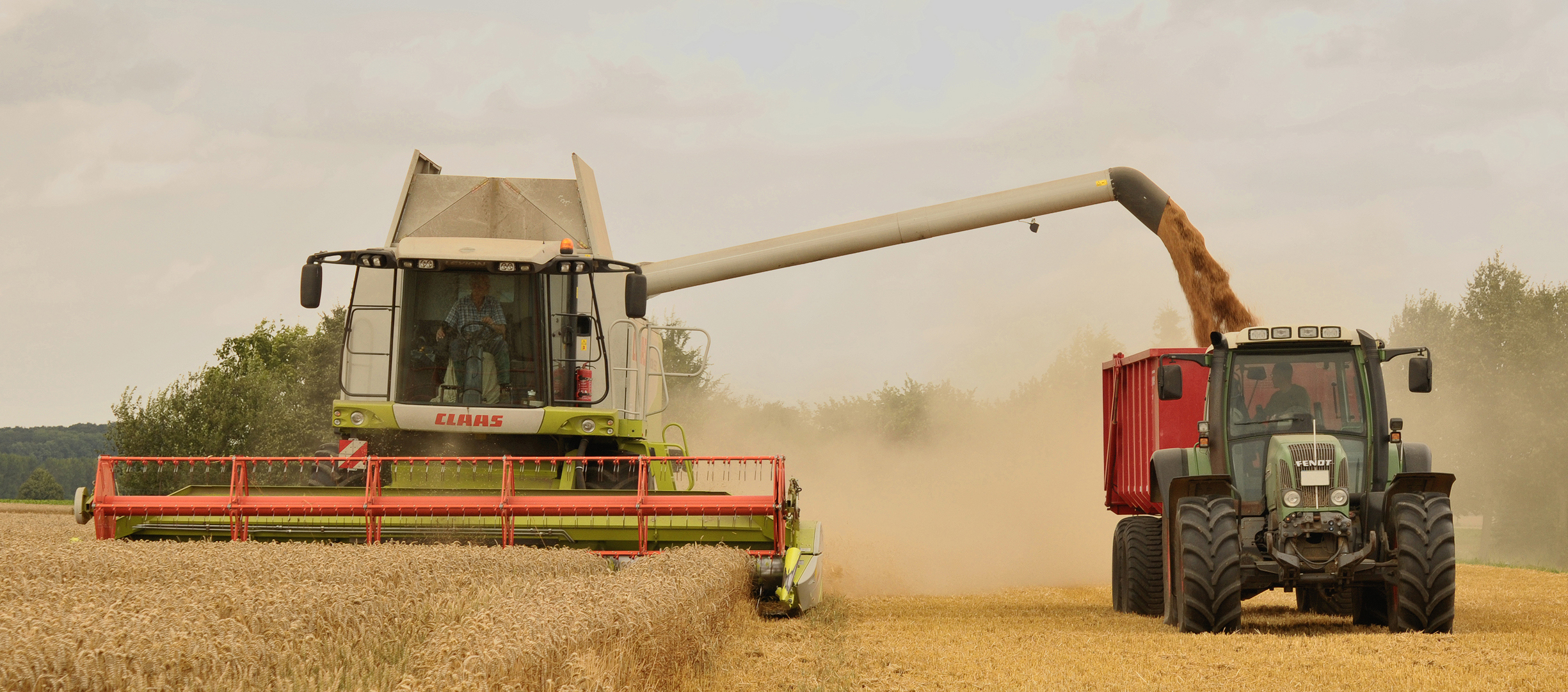 File Unload Wheat By The Combine Claas Lexion 584