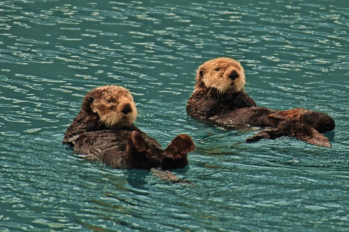 Sea Otters Good Dog Food For Pitbull Puppies