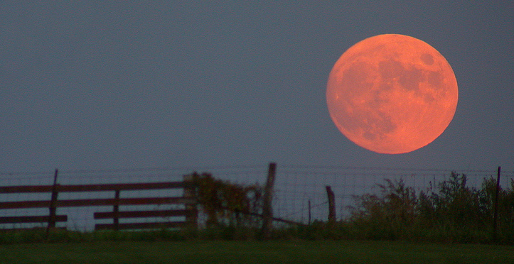 Harvest moon photography at Wikipedia