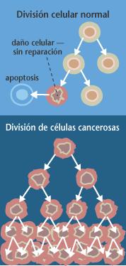 Estructura de células cancer�genas