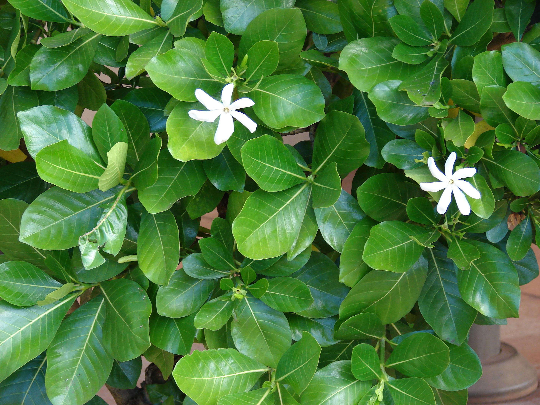 Aquatic Plants And Flowers