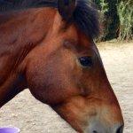 File Horse Head Jpg Wikimedia Commons