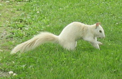 File:Wsquirrel.png