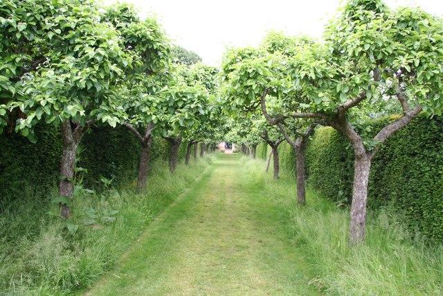 English: Apple Tree walk Walk to the garden ga...