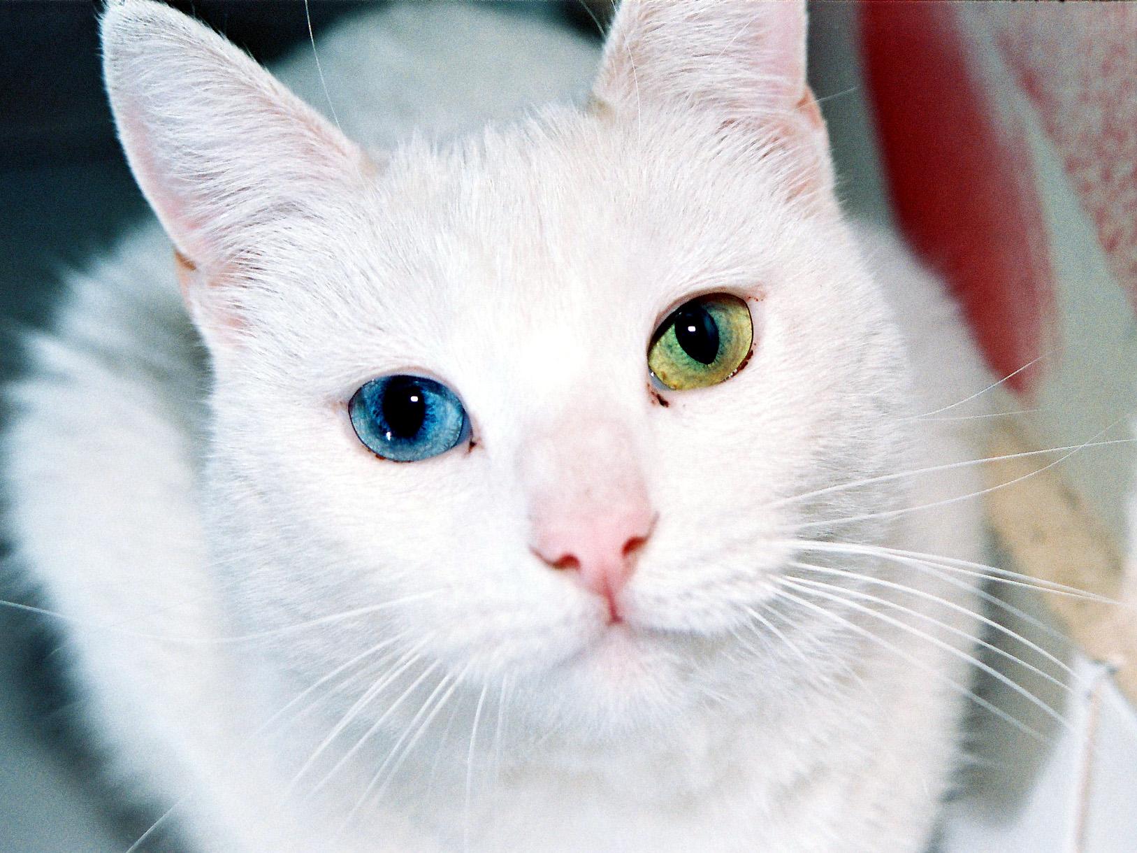 Parece simple pero no lo es: La genética del color de ojos   Desde ...