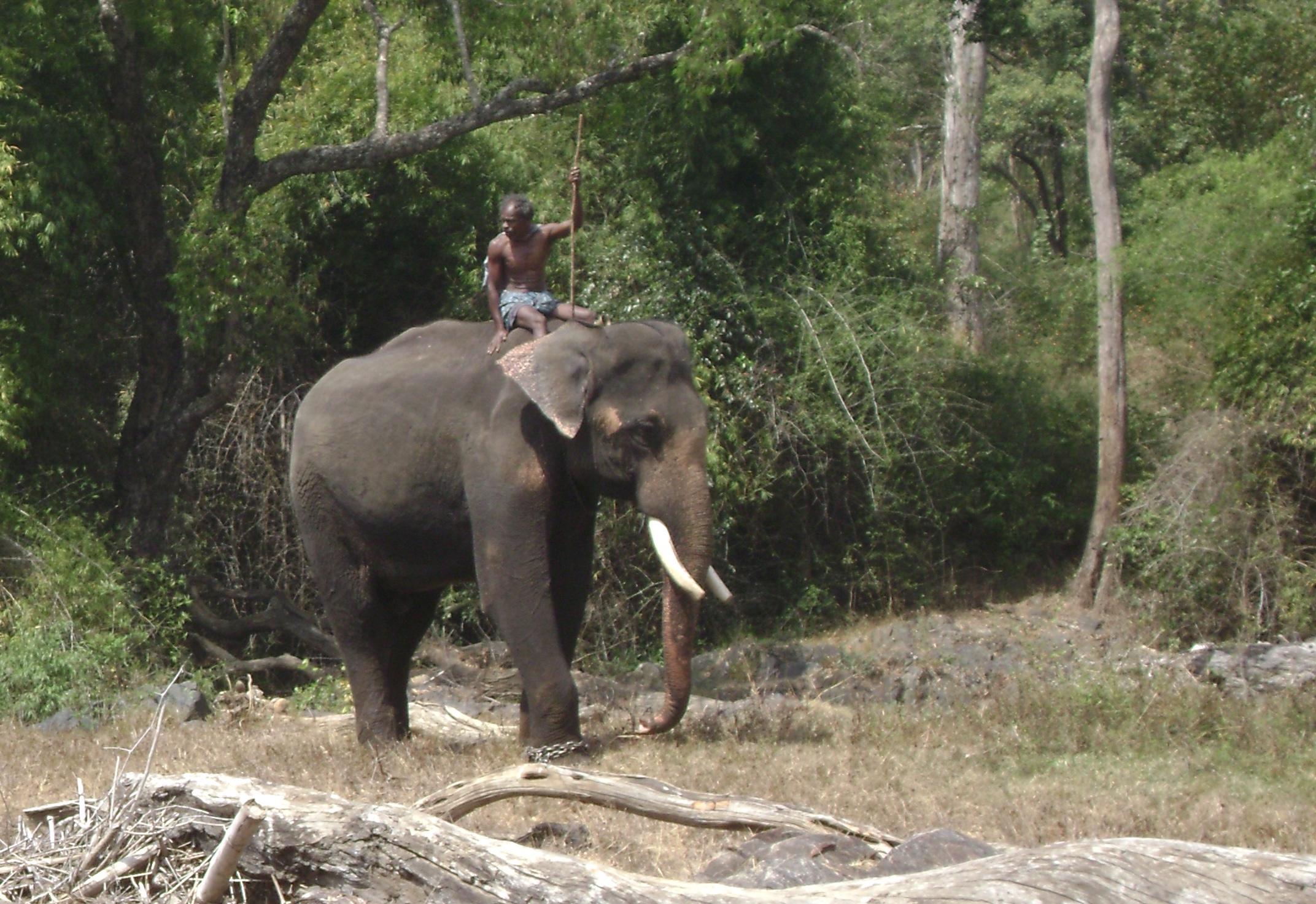 File Mnp Working Elephant