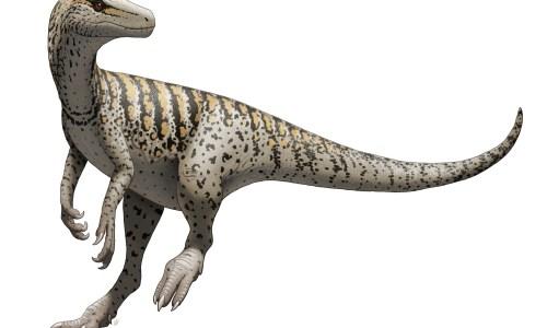 https://i2.wp.com/upload.wikimedia.org/wikipedia/commons/8/86/Herrerasaurus_ischigualastensis_Illustration.jpg?resize=500%2C300&ssl=1
