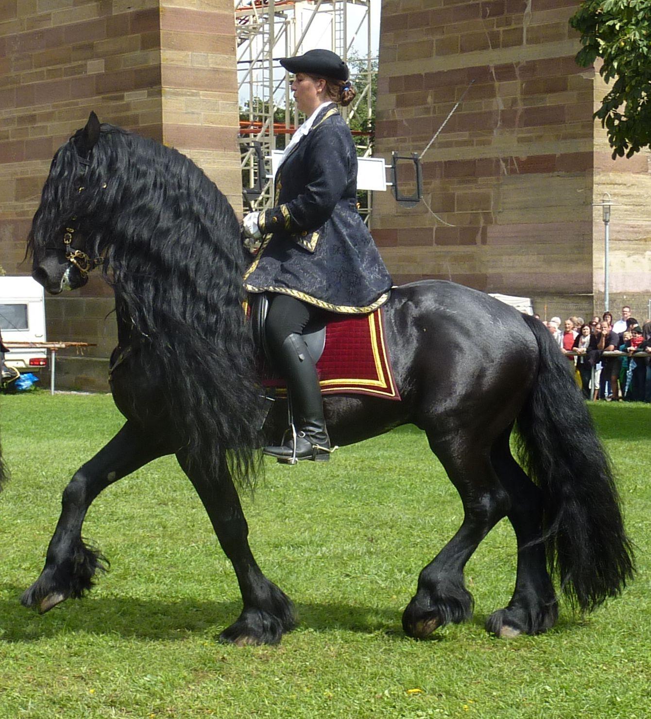 Lista De Raas De Cavalos Wikipdia A Enciclopdia Livre