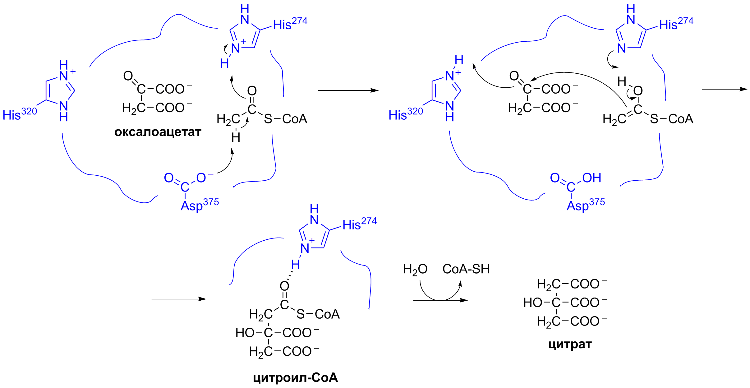 File Krebs Cycle Reaction 1 Mechanism Ru