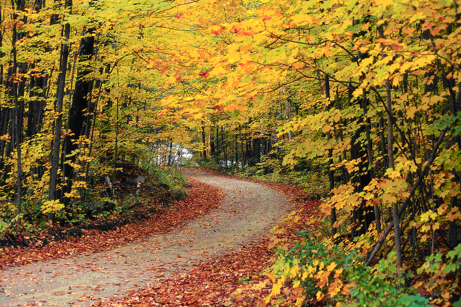 Which MBTI type relates to each season? (Summer, Autumn, Winter and
