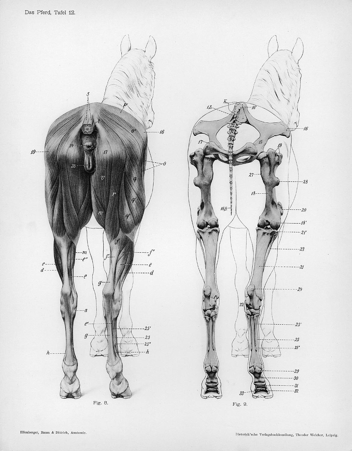 Bibliodyssey Handbook Of Animal Anatomy