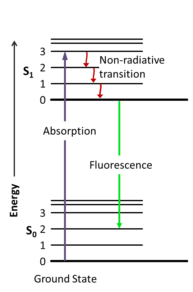 Schematic of fluorescence. An electron absorbs a high-energy photon and jumps to an excited state. After a series of vibrational transitions where no photon is emitted, the electron fluoresces back down to its ground state, emitting a photon. The emitted photon has a lower energy and longer wavelength (green) than the incident photon (blue).