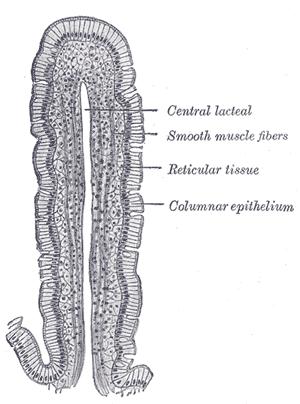 Epithelium cells