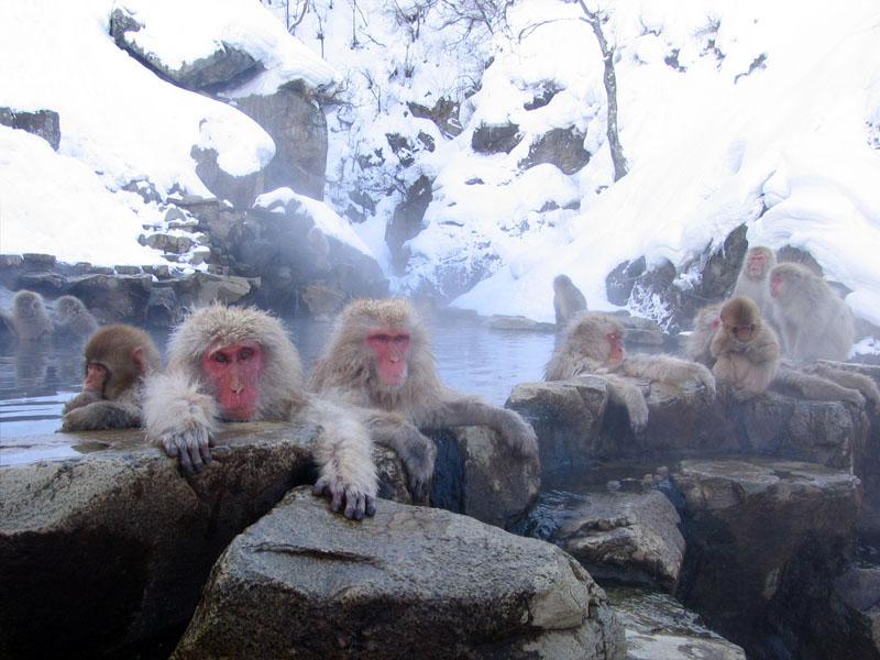Berkas:Jigokudani hotspring in Nagano Japan 001.jpg