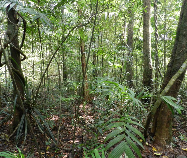 Tropical Rainforest Conservation