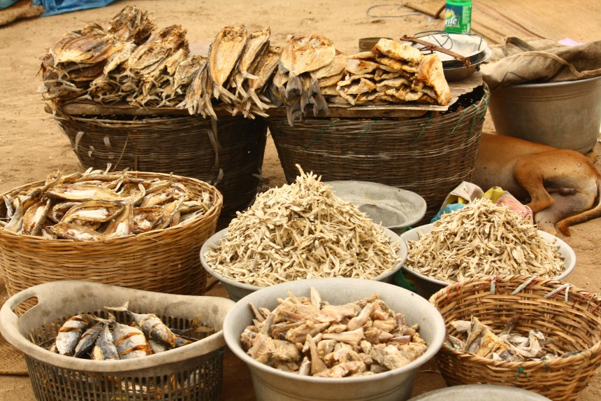 Rules against bringing Dried Fish into the USA - The Clever