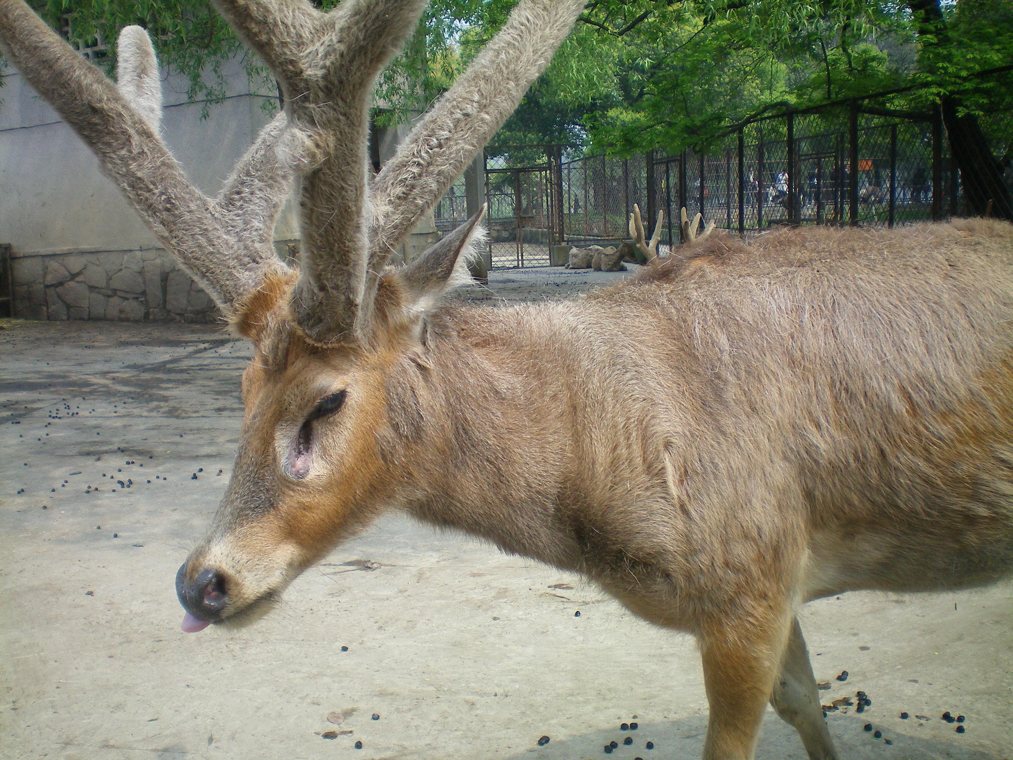 臺灣已經絕種動物 已經 - 愛淘生活