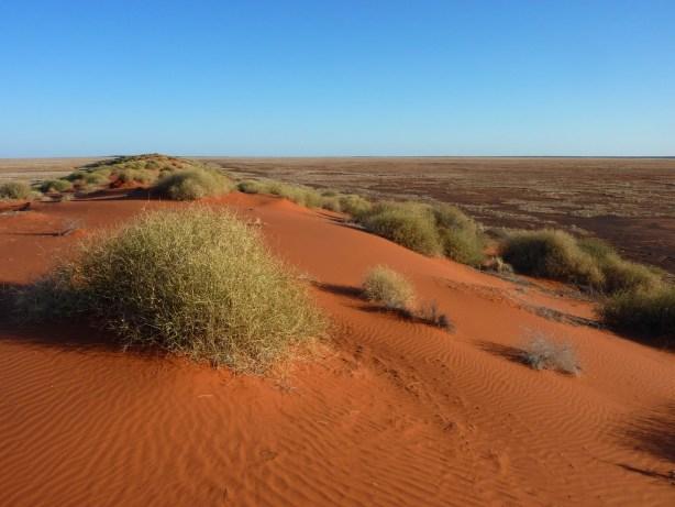 Habitats - deserts