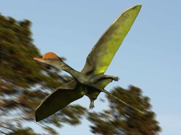 File:Darwinopterus NT.jpg