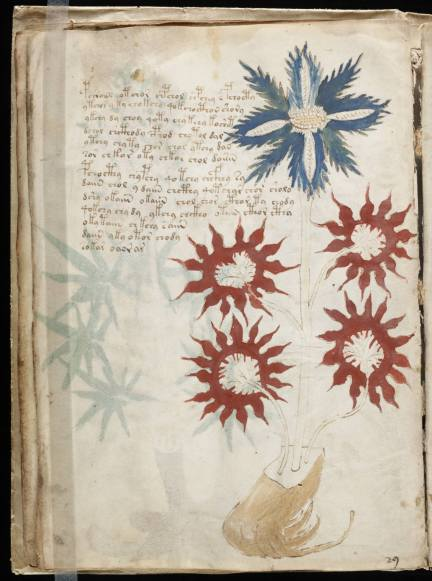 page of medieval manuscript showing red and blue flowers and strange script