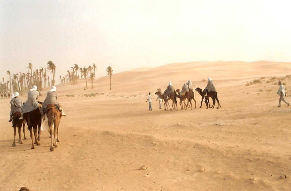 Camels in the desert near Douz in Tunisia