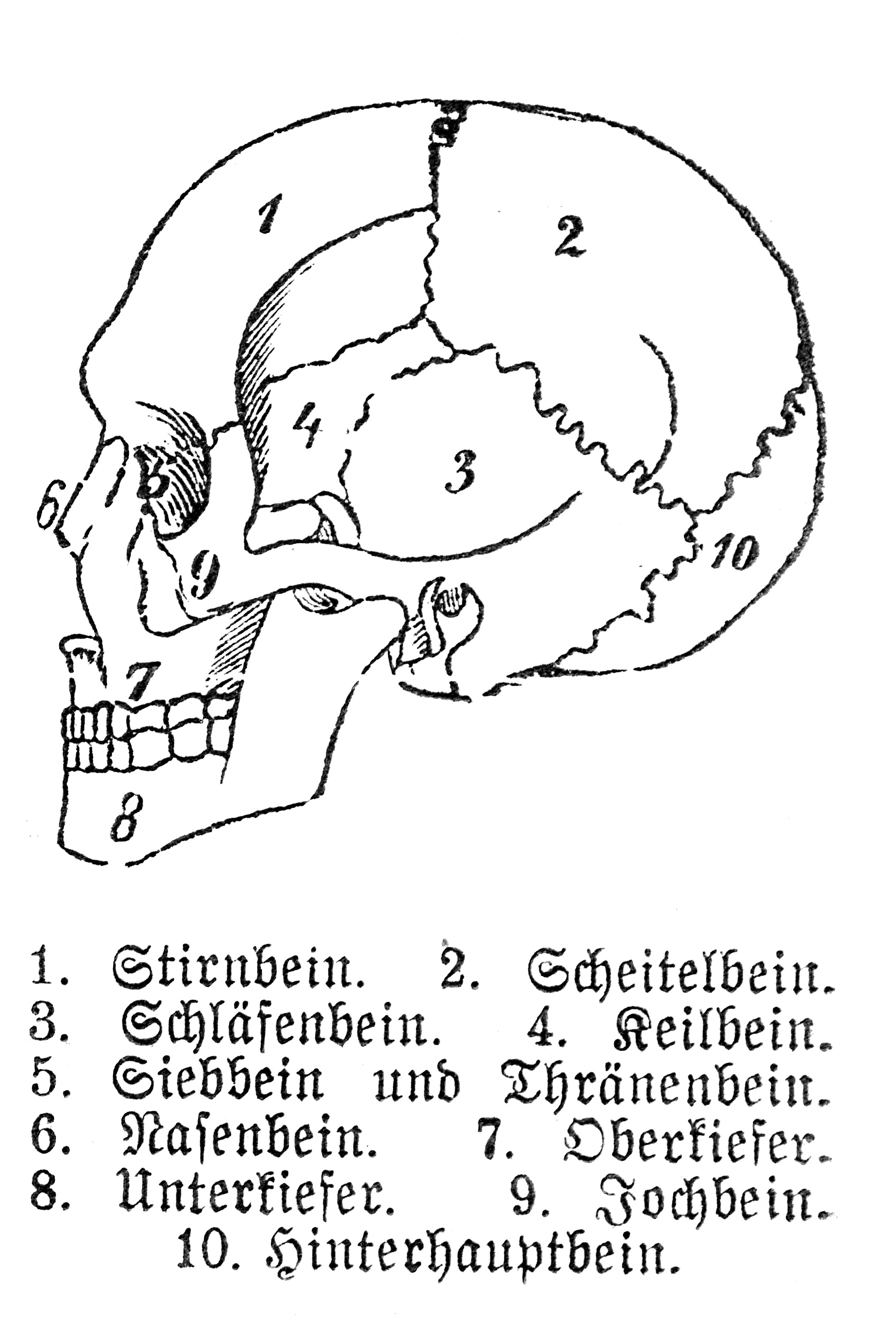 File Human Skull With German Legend