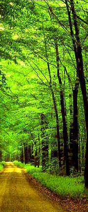 Alemannisch: Selbst fotografiert; Waldweg