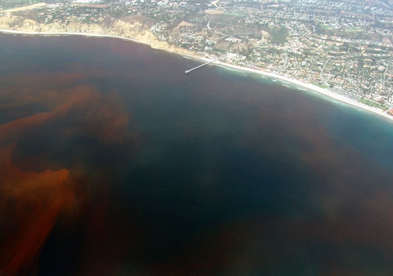 https://i2.wp.com/upload.wikimedia.org/wikipedia/commons/9/96/La-Jolla-Red-Tide.780.jpg