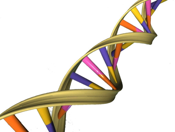 File:DNA Double Helix.png