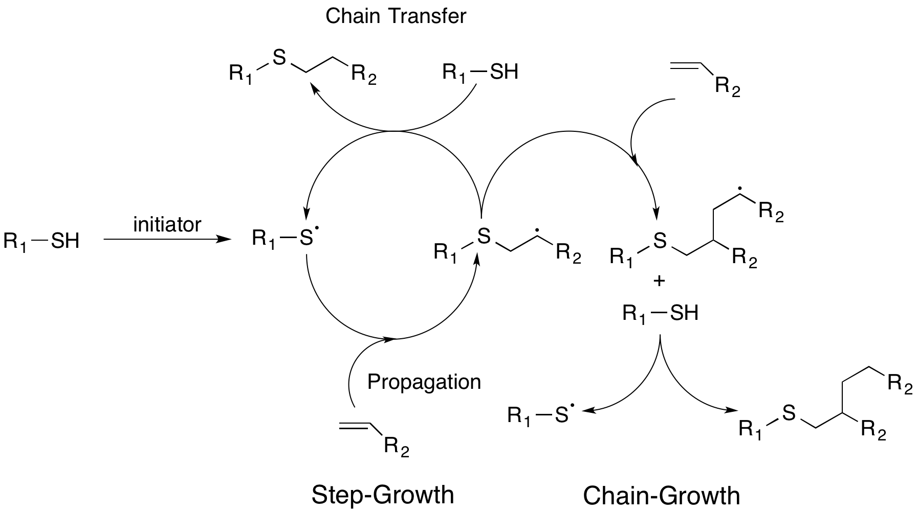 File Thiol Ene Radial Addition Step And Chain Growth