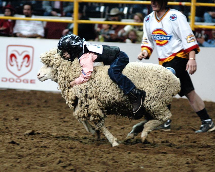 """""""Mutton Bustin"""", beim 13. jährlichen Mexican Rodeo Extravaganza in Denver, von Arthur Mouratidis, Lizenz:CC by"""