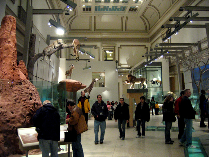 Hall of Mammals at the National Museum of Natu...