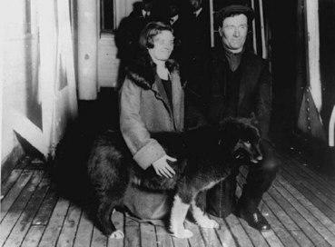 chien - Balto - couple Kaasen
