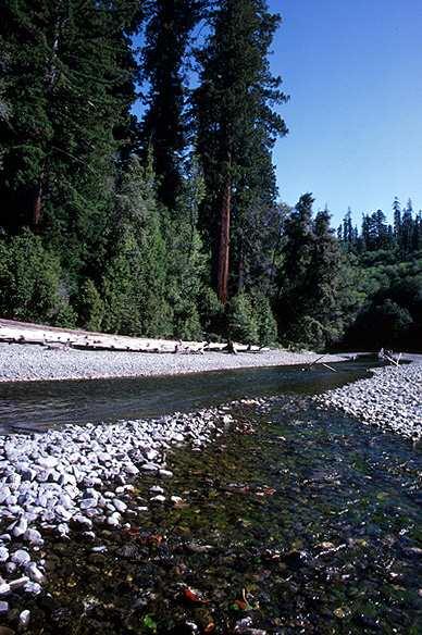 File:Redwood creek.jpg