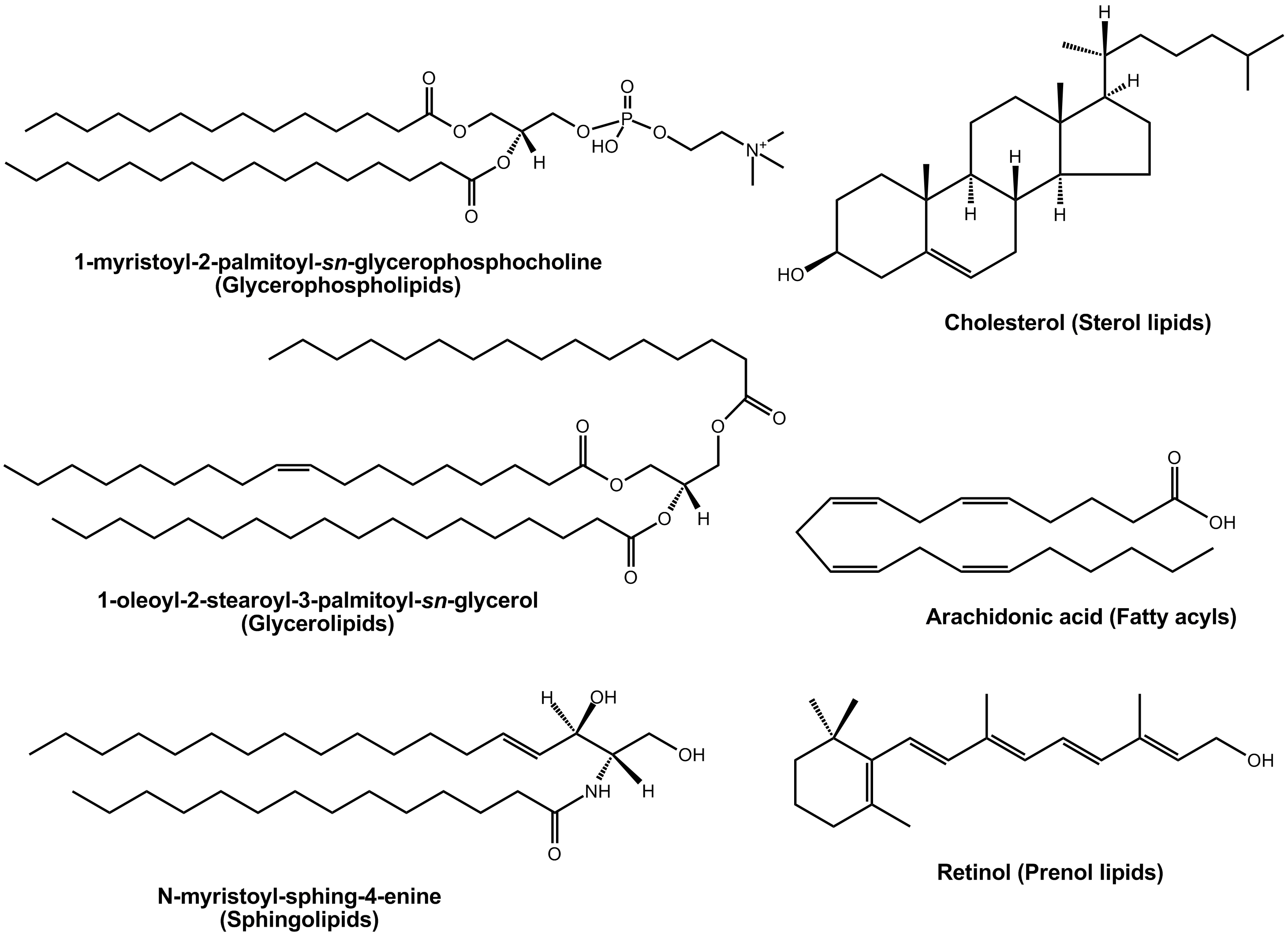 Examples Lipid Molecules
