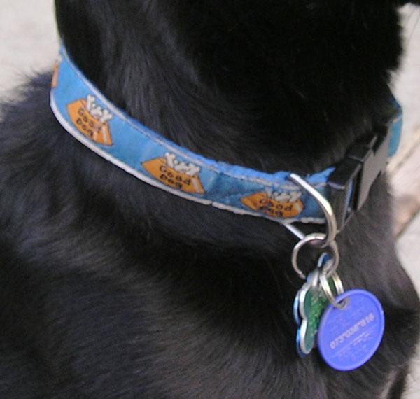 QuickCollarNeck wb Pitbull Dog Accessories