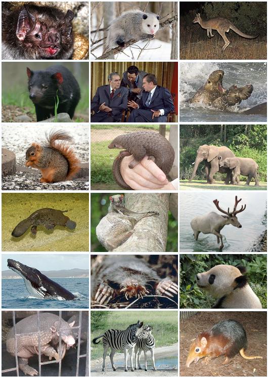 ثدييات ويكيبيديا