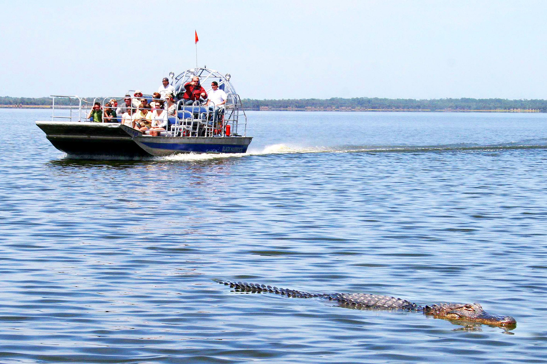 File Alligator Sighting Black Hammock Airboat Rides