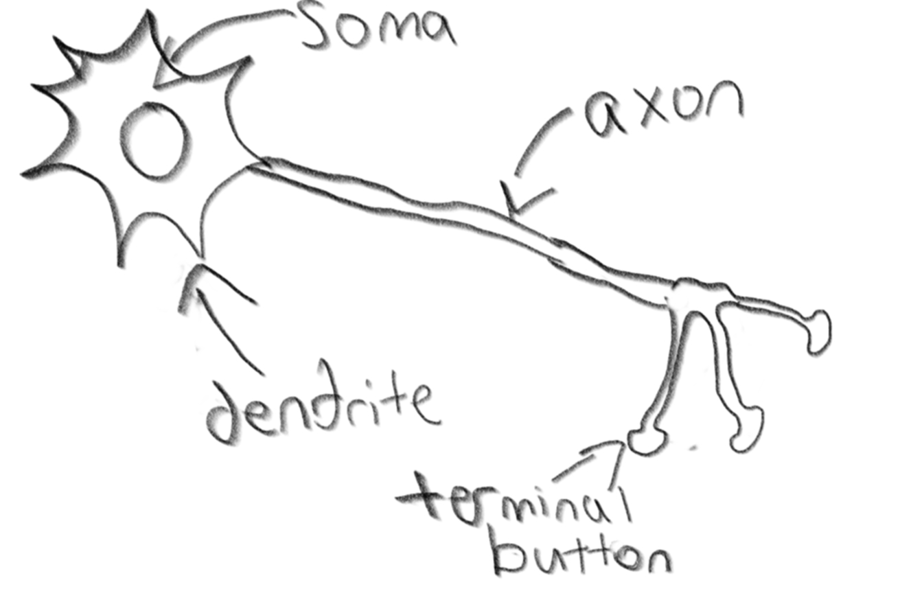 Motor Neuron A Sketch Coloring Pages