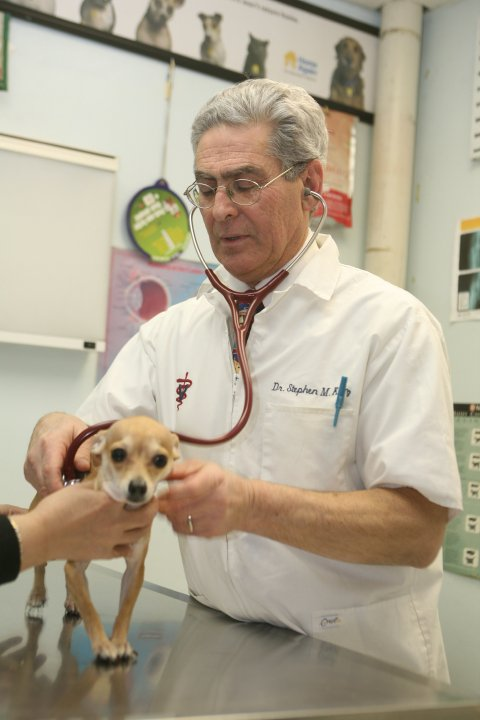 A veterinarian examines a dog