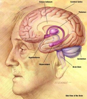 Inteligencia emocional  Wikipedia, la enciclopedia libre