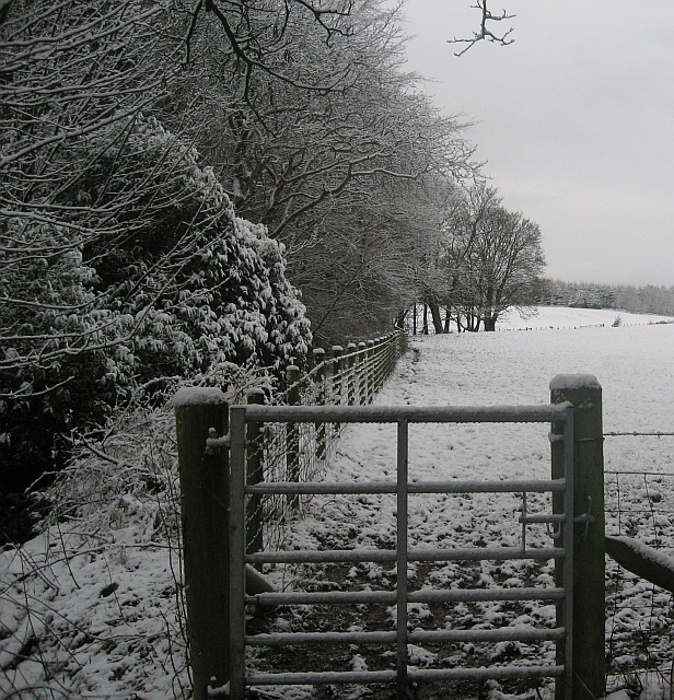 English: Snowy field