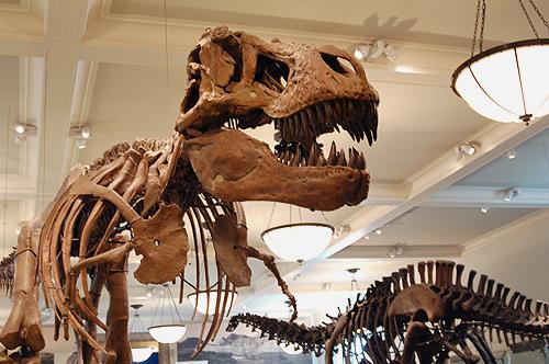 Tyranosaurus (Wikipedia)