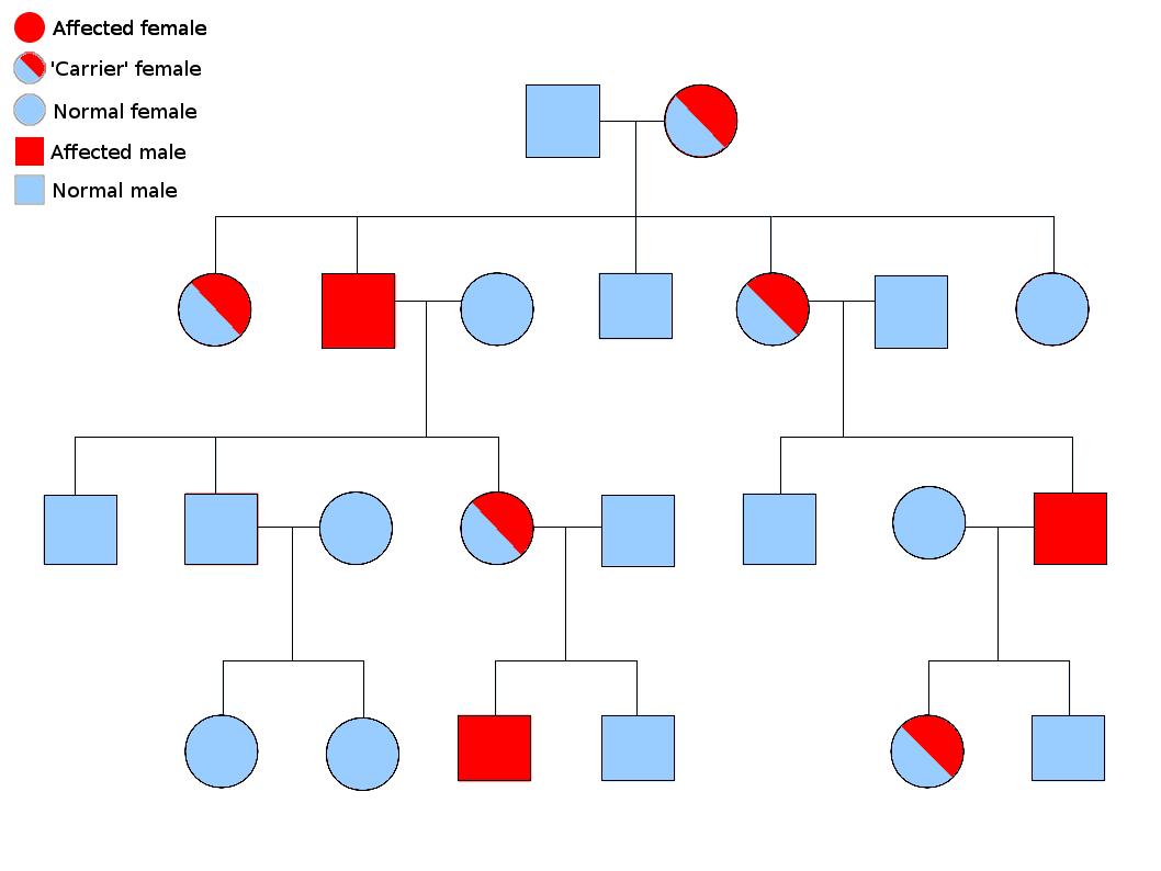 File Linked Inheritance